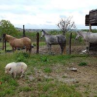 photos 10 animaux