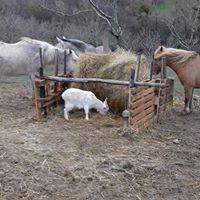 photos 12 animaux
